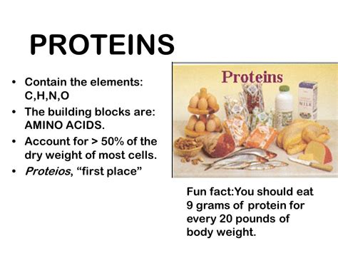protein elements the structure and function of macromolecules ppt