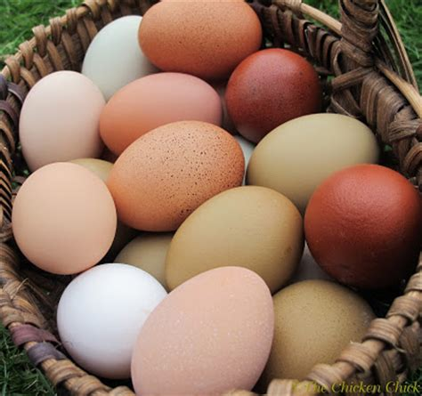 the chicken 174 8 tips for clean eggs from backyard