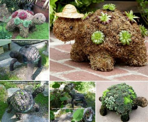 succulent turtle outdoor ideas pinterest succulent turtles will look cute in your garden the whoot