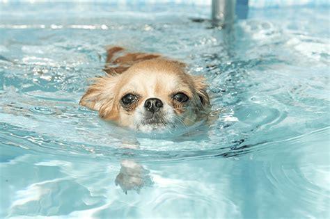 dogs swimming how do i teach my to swim petspot