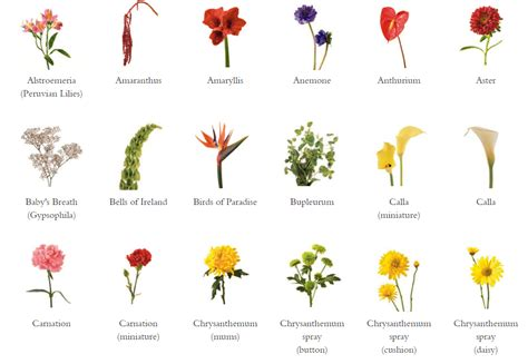 a florist is advertising five types of bouquets glossary fj florist