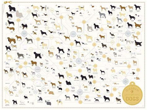 types of dogs chart the diagram of dogs by pop chart lab an print featuring 181 breeds
