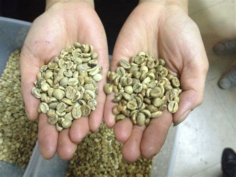 Robusta Coffee roasting coffee at the hanoi backpackers hostel downtown