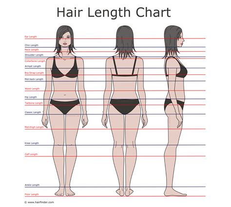 what is the name for hair that is long in the back and short in the front how to describe hair lengths hair length chart and the