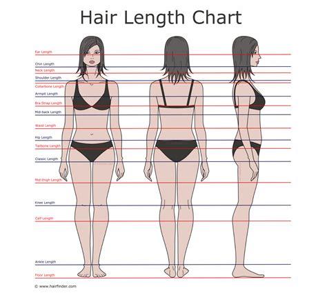 avg hair length of women how to describe hair lengths hair length chart and the