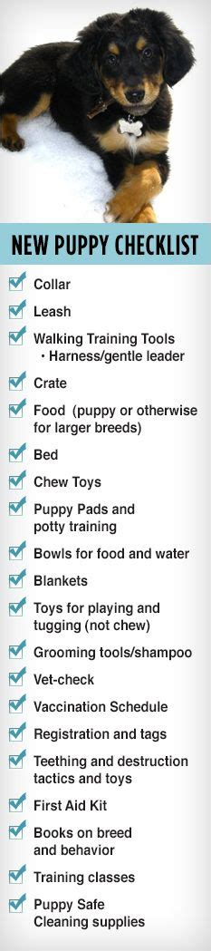 what you need for a puppy 1000 images about new puppy on new puppy checklist new puppy and best