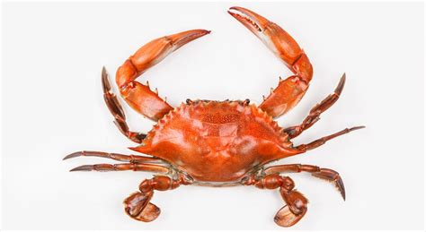 Images Of Crabs