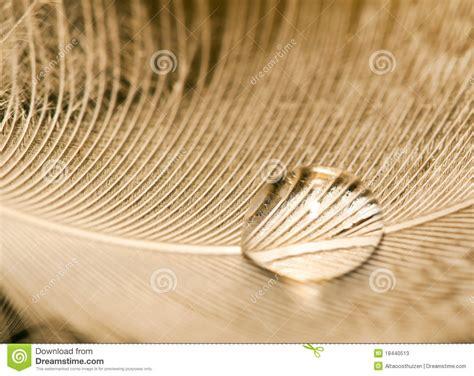 water drops on human skin macro stock photo 151788794 macro of water drop on white feather stock image image of gentle shine 18440513