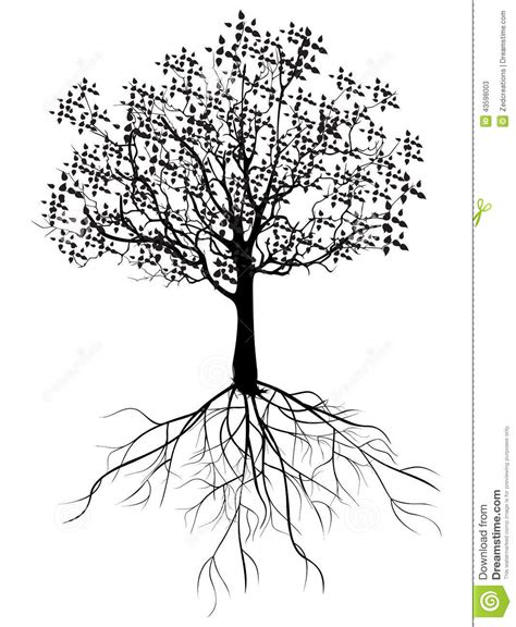 tree with roots stock illustration image 43598003