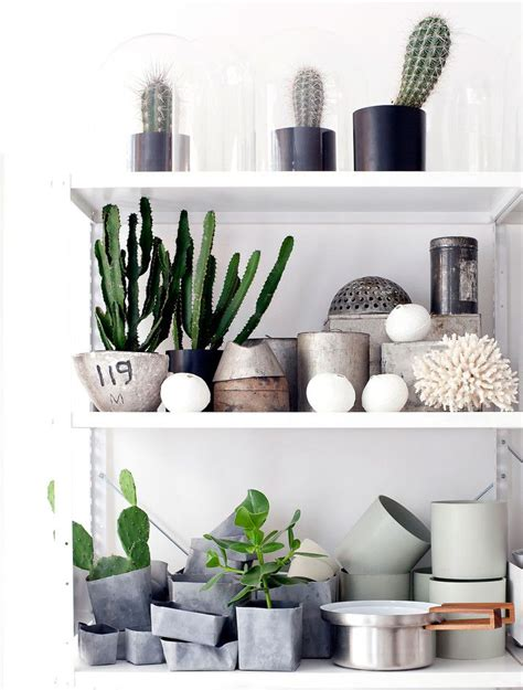 Succulent Planters by Plants In The Home On Pinterest Cate St Hill