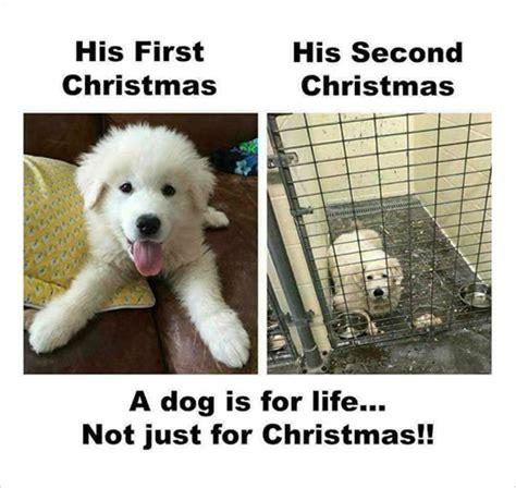 Hilarious Christmas Memes - funny christmas memes loldamn com