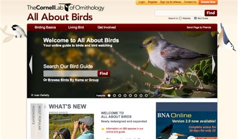 all about quot all about birds quot birdfreak com