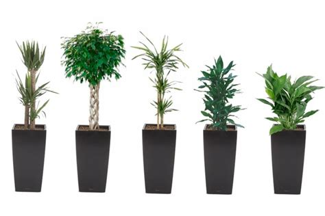 plants for the office tall plants for the office garden containers pinterest