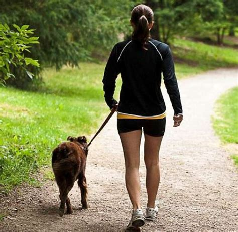 how to a puppy to walk on a leash owners who walk their dogs regularly are healthier than without pets
