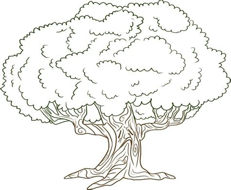 narra tree coloring page free printable tree coloring pages for kids