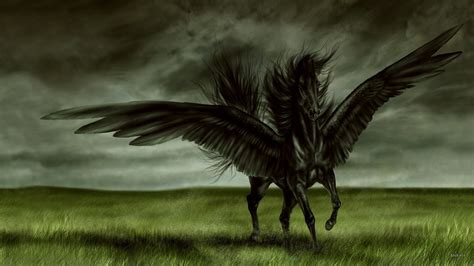 wallpaper hd black horse all wallpapers black horse new best hd wallpapers 2013