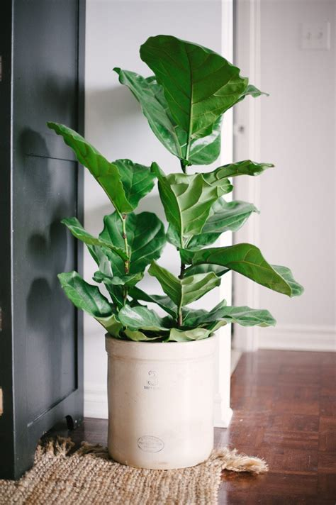 interior plant loving pretty house plants the sweetest occasion