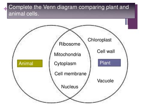 venn diagram plant and animal cells plant cell animal cell and contrast venn diagram pictures to pin on pinsdaddy