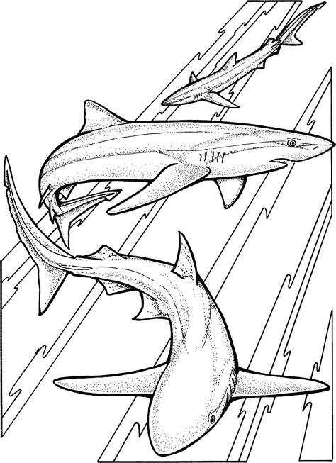 shark coloring pages free shark coloring pages