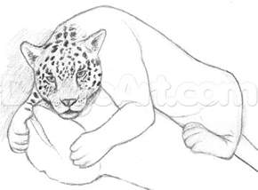 How To Draw A Jaguars How To Draw A Jaguar Step By Step Rainforest Animals