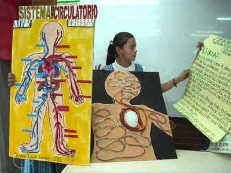 como hacer una maqueta del sistema circulatorio como hacer una maqueta del sistema circulatorio que