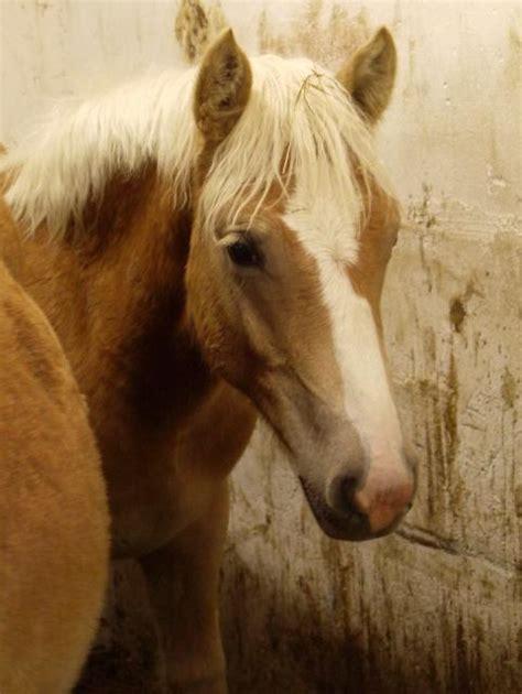 pferde suchen ein neues zuhause wir suchen ein neues zuhause second chance for horses