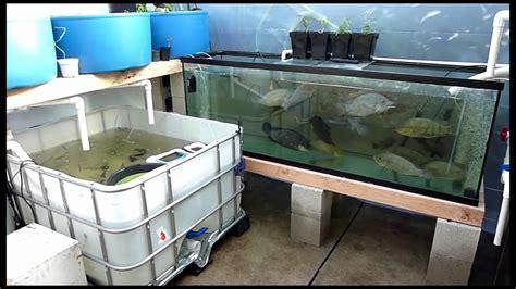backyard hatchery backyard aquaponic fish hatchery youtube