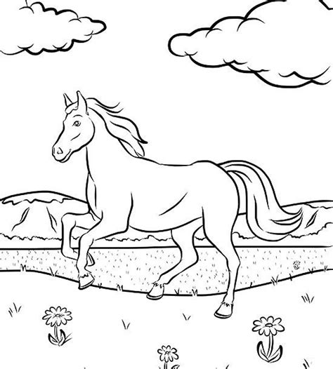 anatomy coloring book indigo horses coloring pages for 8qgdr coloring