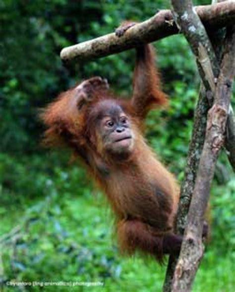 jakarta animal aid network jaan jakarta indonesia