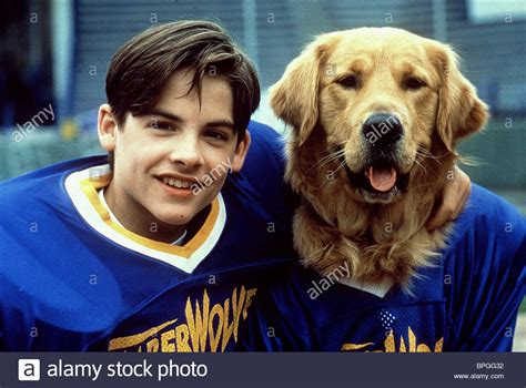 air buddy kevin zegers buddy air bud golden receiver air bud 2 1998 stock photo royalty