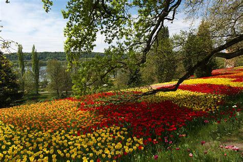 garten ideen blumen flowers for flower flowers gardens outdoor ideas