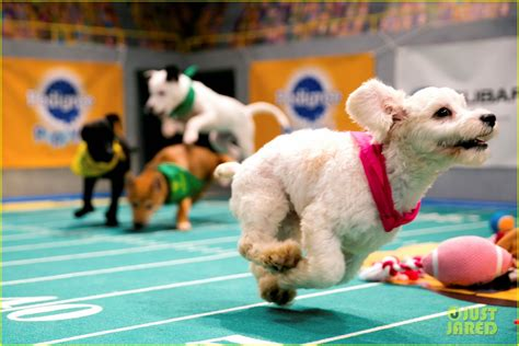 puppy bowl 2017 sized photo of what is the puppy bowl 54 photo 3853449 just jared