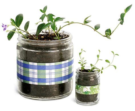 glass container gardening sks bottle packaging gardening supplies containers