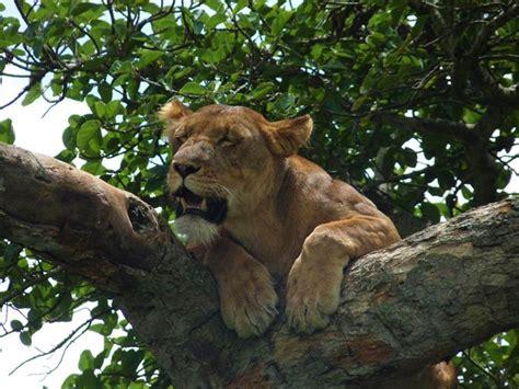 Queen Elizabeth National Park Uganda Wildlife | discovering the wildlife of queen elizabeth national park