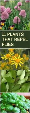 11 plants that naturally repel flies plants that repel flies repel flies and plants