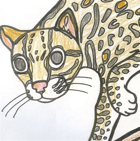 coloring pages exotic animals coloring pages of exotic rainforest animals easy to