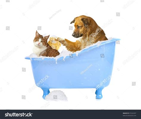 what is dogs in a bathtub cat lick dog and cat in a bathtub stock photo 97232207
