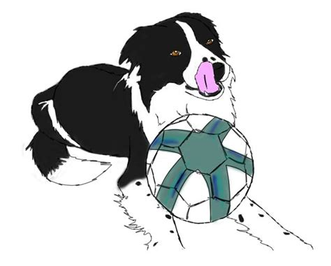 ringo border collie colored by pebblerocker101 on deviantart