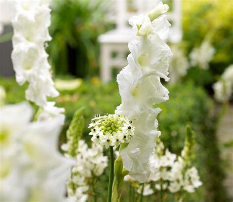 fiori bianchi nomi fiori bianchi la luminosit 224 bianco in giardino