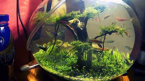 Membuat Aquascape Di Aquarium Bulat | aquarium bulat aquascape youtube