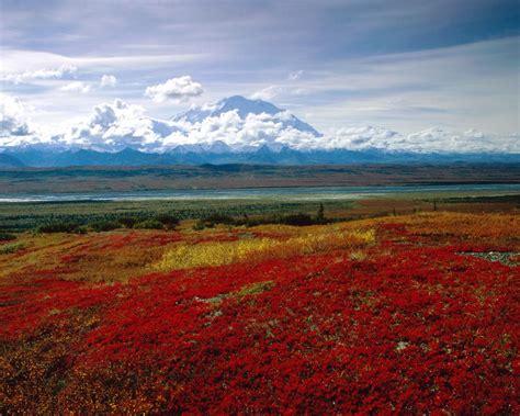 brilliant colors  denali national park alaska