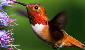 10 fun facts about hummingbirds pawnation