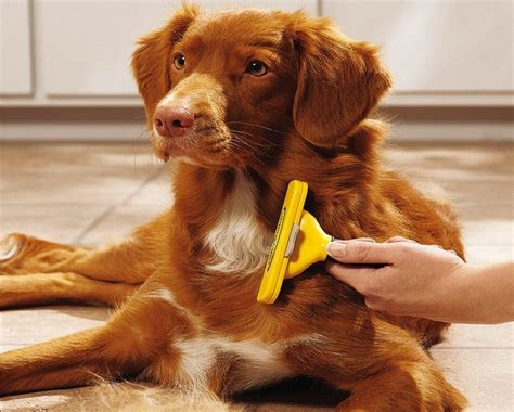 Puppy Shedding Fur by Shedding Tool Best Buys And Tips For Choosing One