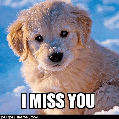 i miss you puppy i miss you puppy meme www pixshark images galleries with a bite