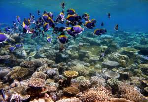 Save coral reefs save coral reefs is a non profit organization which