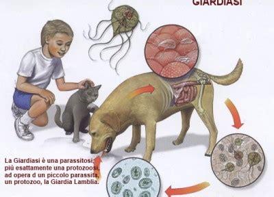 alimenti contro diarrea alimenti contro la giardia