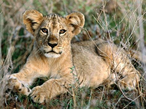 african animals images cute wallpaper hd wallpaper