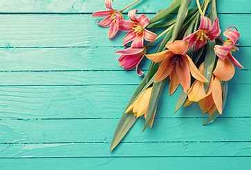 shop fresh spring tulips wallpaper  flowers leaves theme