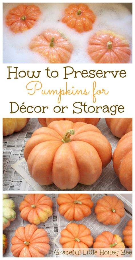 how to preserve pumpkins for how to preserve pumpkins for d 233 cor or storage graceful