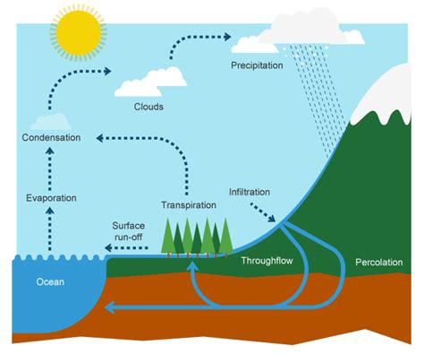 flowchart of water cycle water cycle the process that provides all the water you